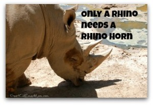 Save the Rhino Day – Facts You Don't Know,Happy May Day Too | Dear ...