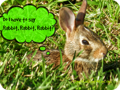 Do rabbits have to say rabbit, rabbit, rabbit on the first day of the month? DearKidLoveMom.com